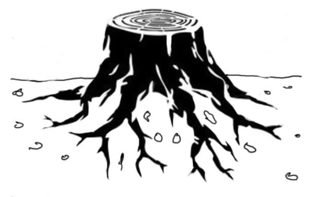 Tree Stump in Brisbane